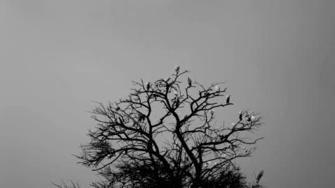 鳥で、クリスマスツリーに座る - スズメ点の映像素材/bロール
