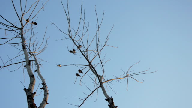 birds sitting on bare tree - twig stock videos & royalty-free footage