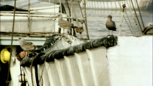 / birds sitting on boats in the harbor. fishing boats at the docks on january 01, 1970 - fischnetz stock-videos und b-roll-filmmaterial