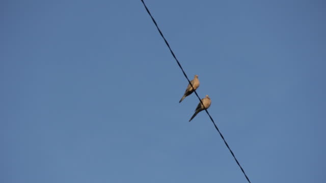 birds sitting on power line - two animals stock videos & royalty-free footage