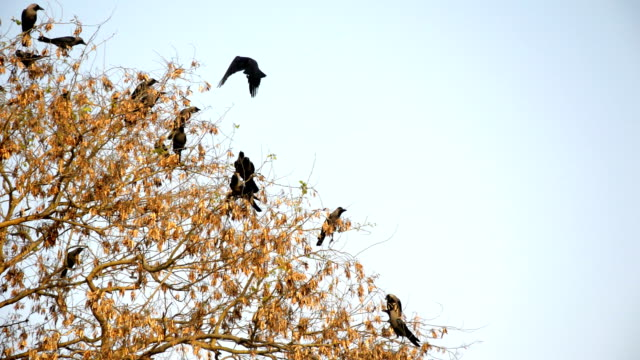 birds sitting on the tree - crow stock videos & royalty-free footage