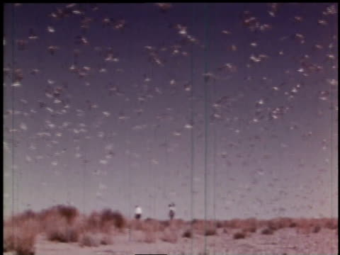 1966 tu birds squawking and flying / hanford, washington, united states - hanford nuclear reservation video stock e b–roll