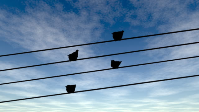 birds standig on a power line wire - telephone line stock videos and b-roll footage