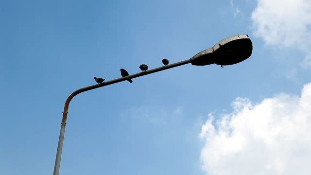 stockvideo's en b-roll-footage met birds standing on a lamp. - elektrische lamp
