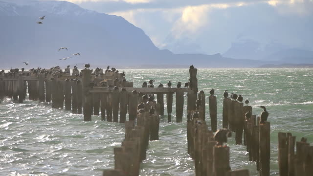 ms birds standing on parts of old pier with wind blowing waves and mountains / puerto natales, chilean patagonia, chile - patagonia chile stock videos and b-roll footage