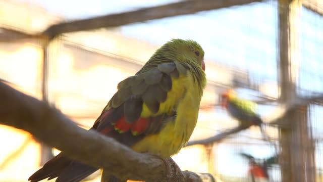 vídeos de stock, filmes e b-roll de birds - pet equipment