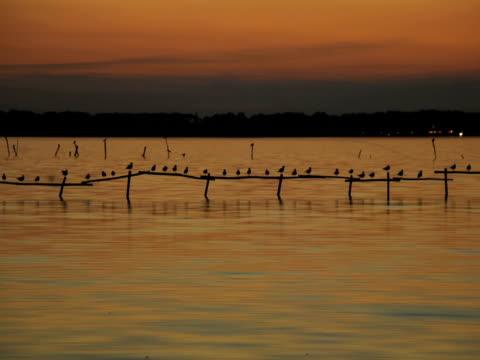 鳥ウェイティングの夜 - 撮影機材点の映像素材/bロール