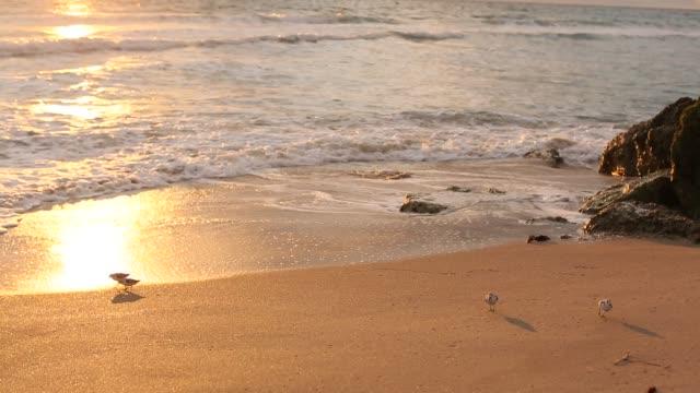 birds walking along a golden seashore - birds flying in v formation stock videos and b-roll footage