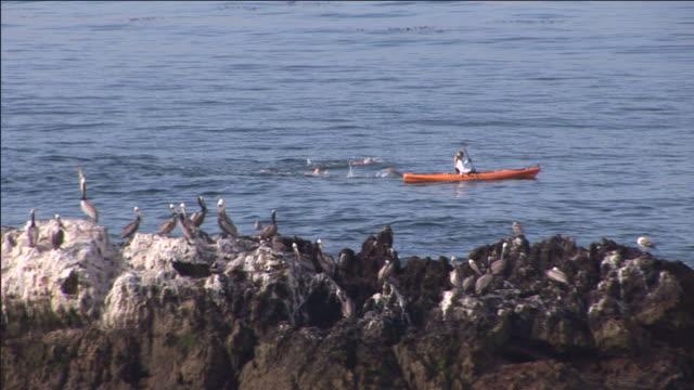 birds watch swimmers racing behind a woman in a kayak. - カリフォルニア州 ラグナビーチ点の映像素材/bロール