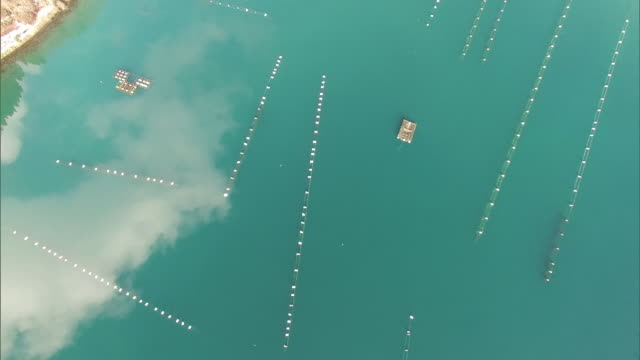 Bird's-eye view, looking straight down on oyster lines