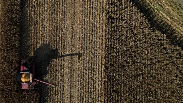 Bird'seye view of corn being harvested by a combine harvester in a field in Princeton Illinois US on Monday Oct 9 2017 Photographer Dan Acker