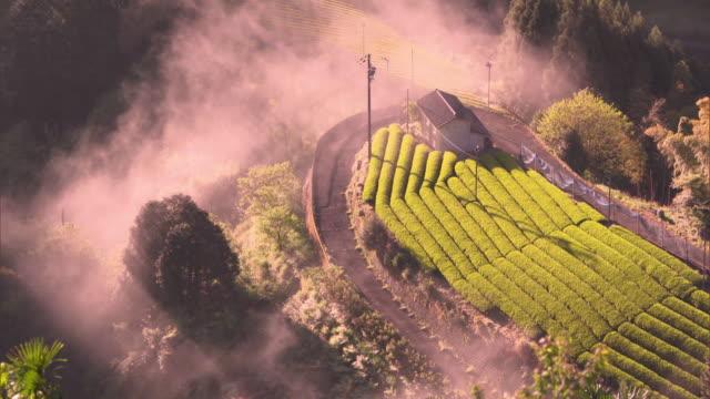 Bird's-eye view: Tea fields in Ryogo-uchi area, Shizuoka, Japan