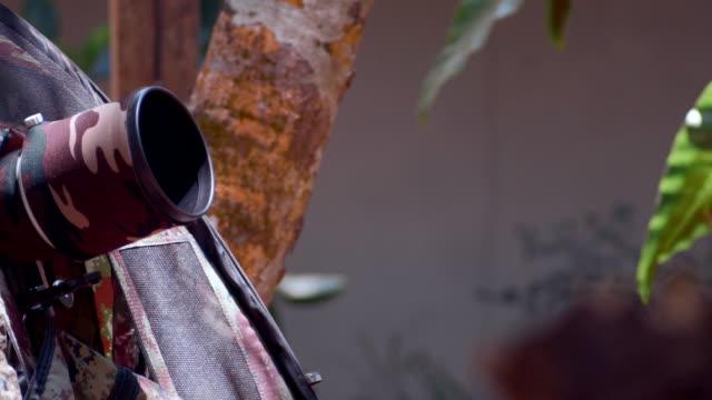 バードウォッチャーは、鳥の写真を撮る - デジタル一眼レフカメラ点の映像素材/bロール