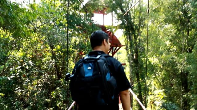 Birdwatcher walking on treetop canopy footbridge