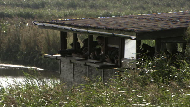 birdwatchers peer through binoculars in hide, norfolk, uk - バードウォッチング点の映像素材/bロール