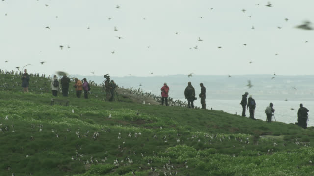 birdwatching tourists amongst seabird colony, farne islands, england - northumberland coast stock videos & royalty-free footage