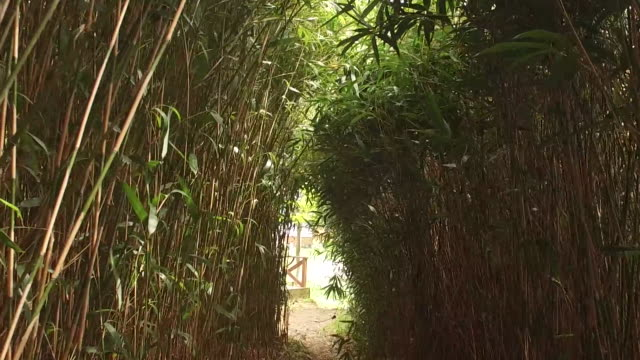 bireonggil road in bamboo forest / geumodo island, yeosu, south korea - 揺れる点の映像素材/bロール