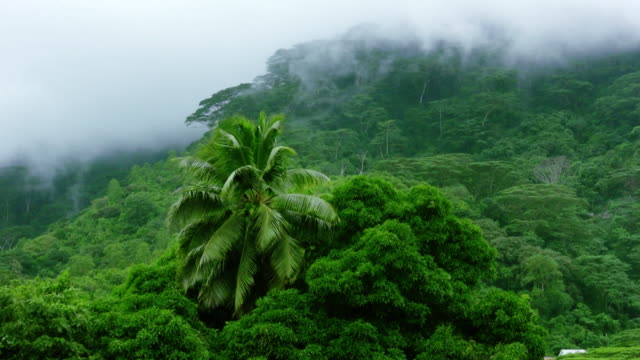 vídeos de stock, filmes e b-roll de nascimento de nuvem - floresta tropical