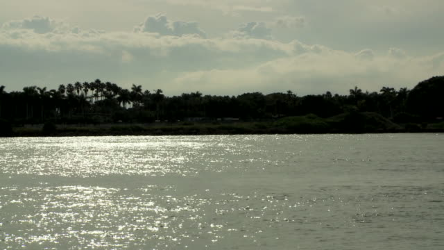biscayne bay, sunlight reflecting on water, white clouds in sky, birds flying, fisher island trees in silhouette bg. - gulf coast states stock-videos und b-roll-filmmaterial