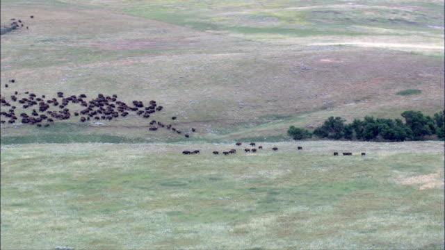 Bisons grasen - Luftbild - South Dakota, Perkins County, Vereinigte Staaten von Amerika