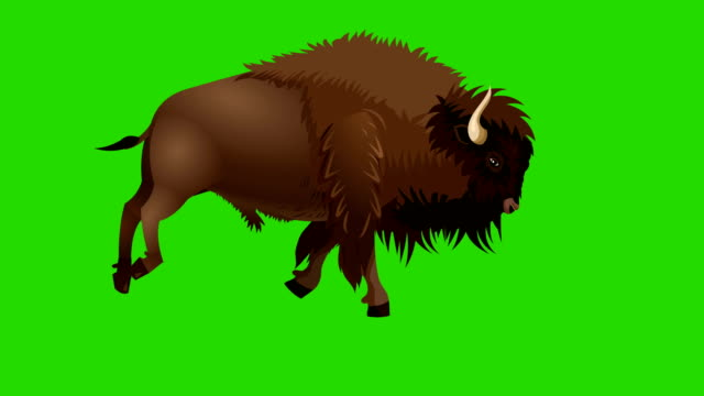 bison run cycle animation - american bison stock videos & royalty-free footage