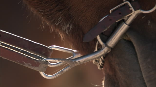 bit and reins on domestic horse, yellowstone, usa - horse bit stock videos and b-roll footage