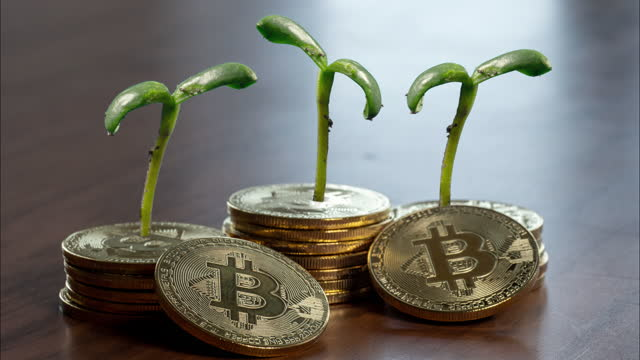 bitcoin growth, plants growing out of coins - cryptocurrency stock videos & royalty-free footage
