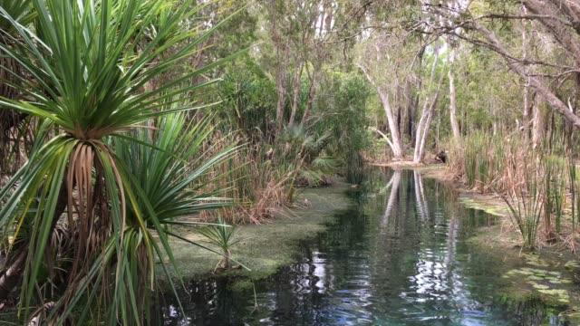 vidéos et rushes de bitter springs mataranka northern territory australia - piscine thermale
