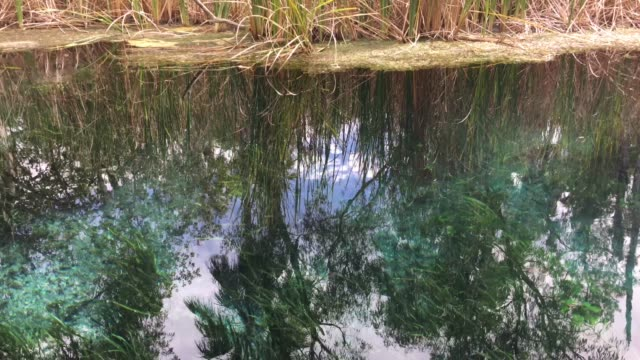 vidéos et rushes de bitter springs northern territory australia - piscine thermale