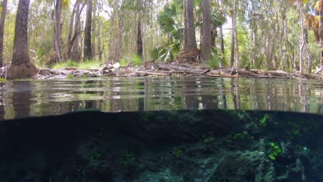 bitter springs thermal pool mataranka northern territory, australia - northern territory australia stock videos & royalty-free footage