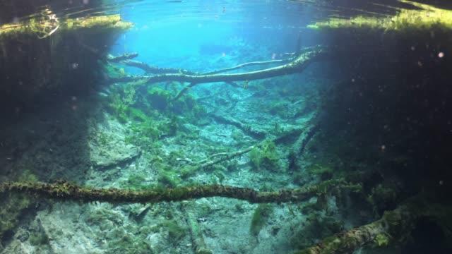 bitter springs thermal pool mataranka northern territory, australia - thermal pool stock videos & royalty-free footage