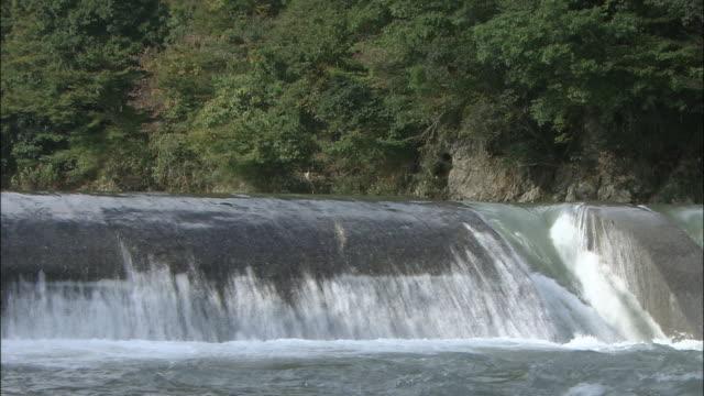 Biwa trout leaping upstream over weir on River Chinai, Takashima