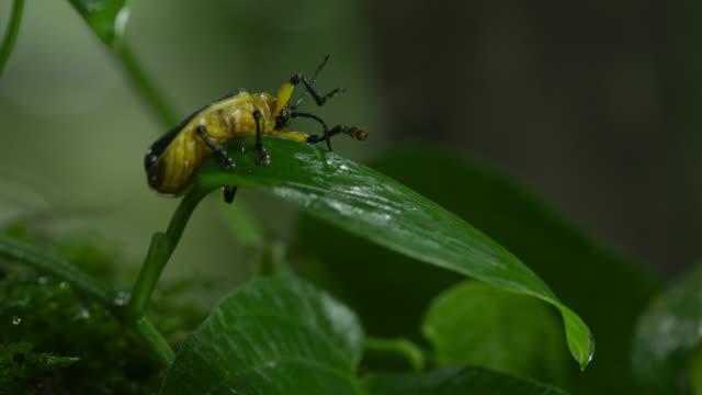 Black and orange beetle cleans itself on leaf.