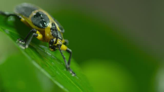 Black and orange beetle on leaf.