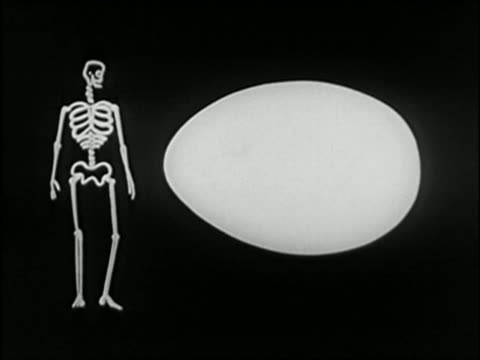 Black and white 1940 ANIMATION words 'mineral', 'protein', and 'vitamin' flash on egg + change skeleton to man