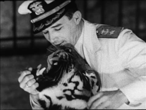 black and white 1940 close up trainer putting face in tiger's mouth at coney island, ny / industrial /audio - coney island stock-videos und b-roll-filmmaterial