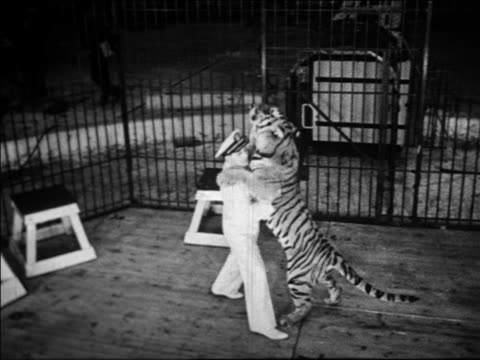 black and white 1940 high angle pan trainer dancing with tiger in circus / coney island, ny / industrial /audio - coney island stock-videos und b-roll-filmmaterial