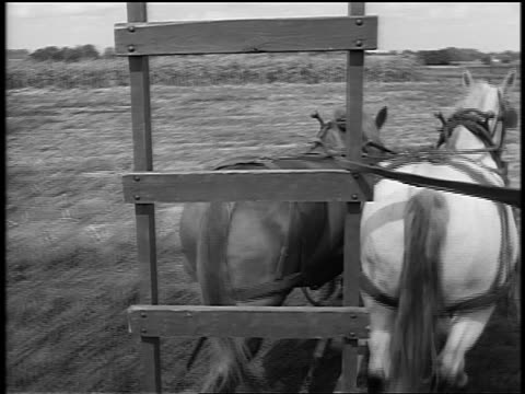 Black and white 1944 horse-drawn plow/wagon point of view in field / cows in background / documentary