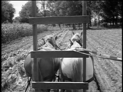 black and white 1944 horse-drawn plow/wagon point of view in field / trees in background / documentary - horsedrawn stock videos & royalty-free footage
