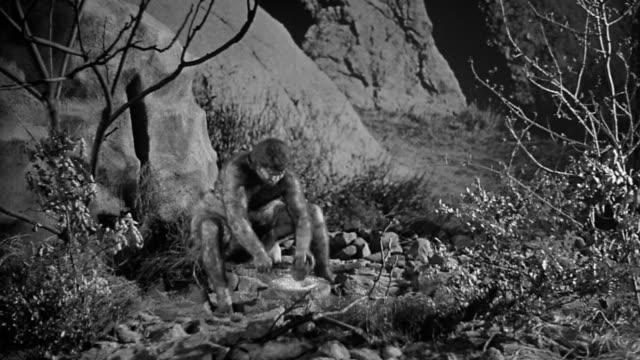 Black and white 1950s hairy cave man using grinding tool is hit by rock