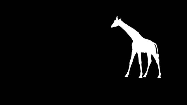 A black and white 3D giraffe walking on green screen.