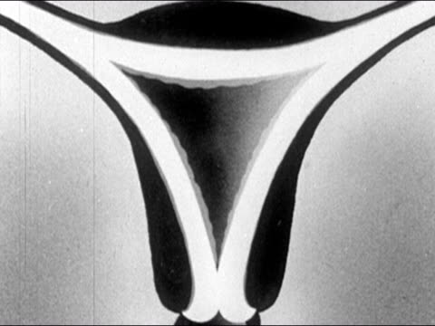 1953 Black and white animation of egg being released from ovary and traveling through the fallopian tube towards the uterus / uterine lining thickening / zoom out lining breaking down and being expelled through vagina / AUDIO