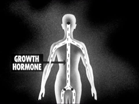 1953 black and white animation of the pituitary gland releasing growth hormone into boy's body at puberty / adolescent boy growing into man / audio - hormone stock videos & royalty-free footage