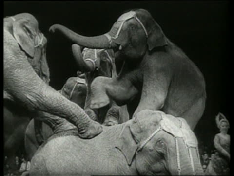 black and white close up of elephants standing on each other in circus / germany / audio - zirkusveranstaltung stock-videos und b-roll-filmmaterial
