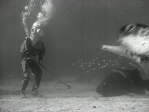 1946 black and white composite medium shot man in diving suit walking on ocean floor as giant sea turtle swims around him - モノクロ点の映像素材/bロール
