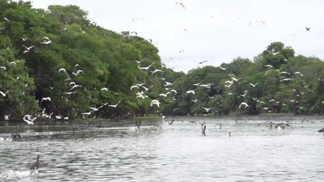 black and white herons flying at the amazon forest - boat camera - amazon region stock videos & royalty-free footage