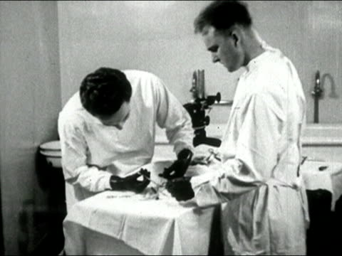 vídeos de stock e filmes b-roll de 1935 black and white medium shot two men performing surgery on a rabbit/ audio - equipamento cirúrgico
