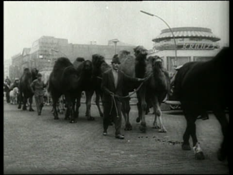 black and white men leading camels on city street / germany / audio - pflanzenfressend stock-videos und b-roll-filmmaterial