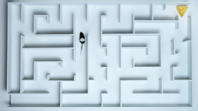 ha, ws, black and white mouse in maze - maze stock videos & royalty-free footage