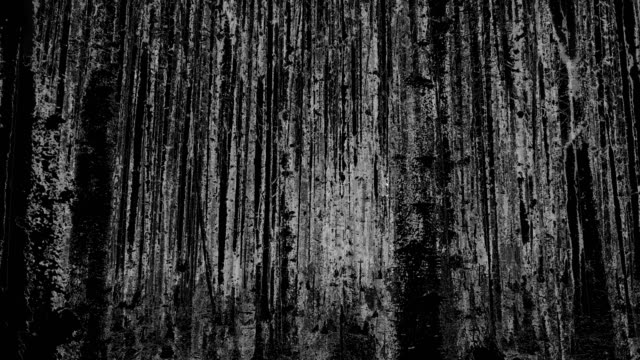 the forest - black background (loop) - spooky stock videos & royalty-free footage